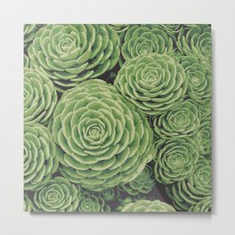 Succulents | Garden Plants Metal Print