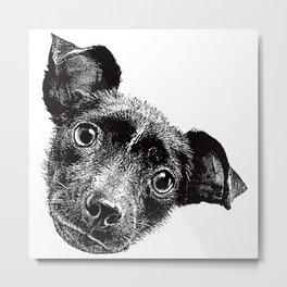 Cute puppy face Metal Print