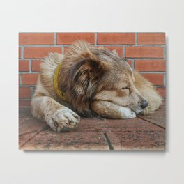 A Nice Shady Sleep Metal Print