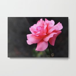 Garden of Joy Metal Print