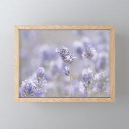Lavenderfield - Lavender Summer Flower Flowers Floral Framed Mini Art Print