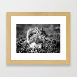 Squirrel Conquer Framed Art Print