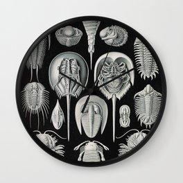 Ernst Haeckel Horseshoe Crab Vintage Illustration Wall Clock