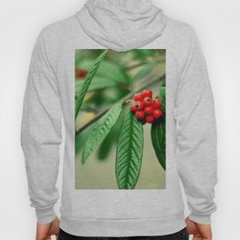 Red and green Hoody