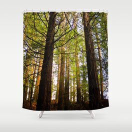 Within The Redwoods Shower Curtain