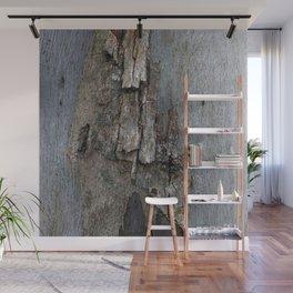 Eucalyptus Tree Bark and Wood Texture 16 Wall Mural