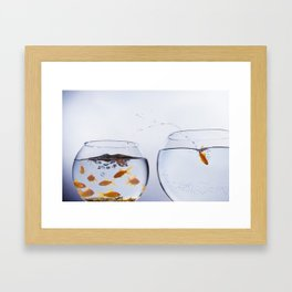 Goldfish escaping a crowded bowl Framed Art Print