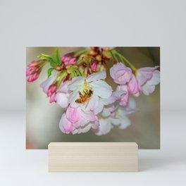 Saratoga Cherry Blossoms Mini Art Print