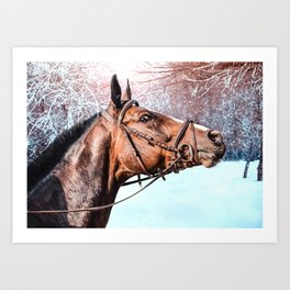 Beautiful horse head isolated on winter background Art Print