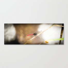 Red Tail Dragon Fly Canvas Print