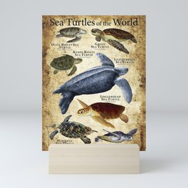 Sea Turtles of the World Mini Art Print
