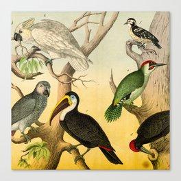 6 Birds Canvas Print