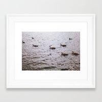 ducks Framed Art Prints featuring Ducks by Kiara Rose
