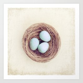 Birds Nest Photography, Robins Egg Nest, Spring Photography, Three Babies Art Print