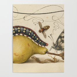 Pear Butterfly Caterpillar Poster
