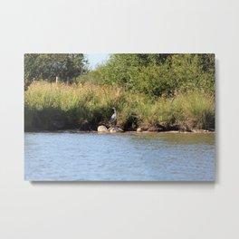 Heron next to a river Metal Print