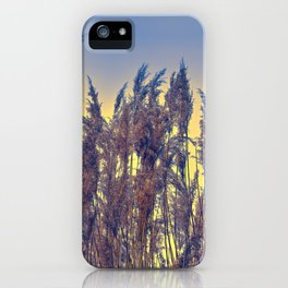 reed and sunset at lake iPhone Case