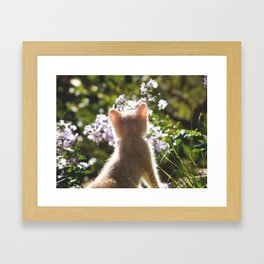 The Young observer Framed Art Print