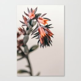 Summer Succulent #2 Canvas Print