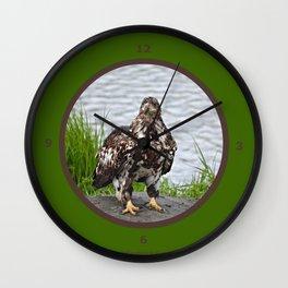 Eagle - Immature Baldy Wall Clock