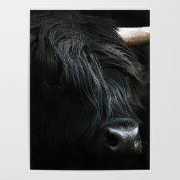 Minimalist Black Scottish Highland Cattle Portrait - Animal Photography Poster