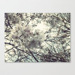 Some flowers grow Canvas Print