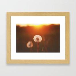 SUNSET DANDELION Framed Art Print