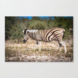 Angry Zebra Canvas Print