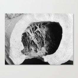 bone interior Canvas Print
