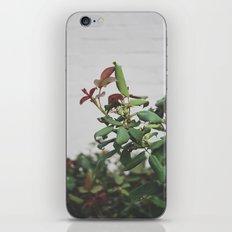 Rose Hips iPhone & iPod Skin
