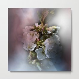 apple blossoms in spring -1- Metal Print