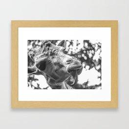 Giraffe Licked Framed Art Print