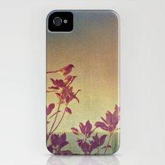 Mimus polyglottos in top of Magnolia Grandiflora iPhone (4, 4s) Slim Case