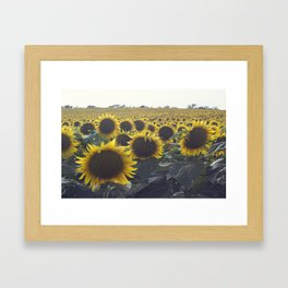SUNFLOWER_1 Framed Art Print