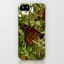 Feeding butterfly iPhone Case