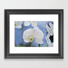 White Phalaenopsis Framed Art Print