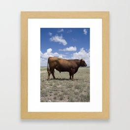 Bull, Texas Framed Art Print