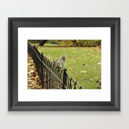 Squirrel on a Fence Framed Art Print