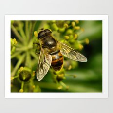 Bee? Art Print
