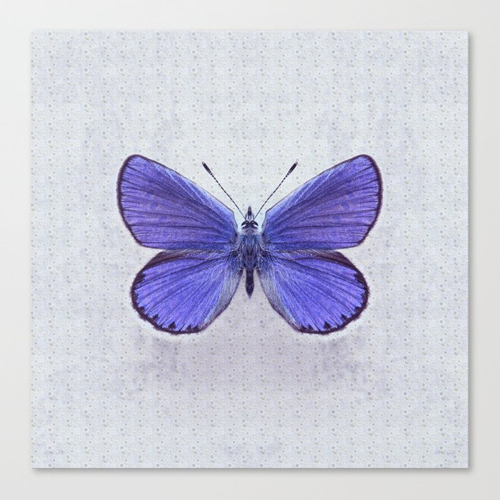 Violet Butterfly on Floral Background. Canvas Print
