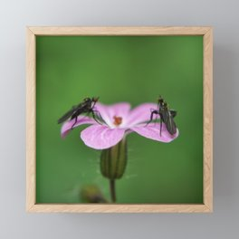 Collecting Pollen Framed Mini Art Print
