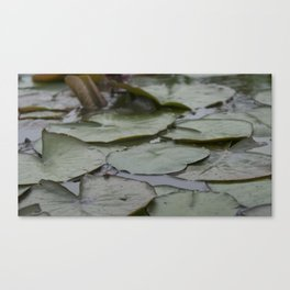 Leap Frog Canvas Print