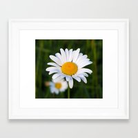 daisies Framed Art Prints featuring Daisies by Rose Etiennette