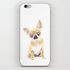 Chihuahua iPhone & iPod Skin