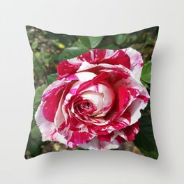 A Red and White Rose Throw Pillow