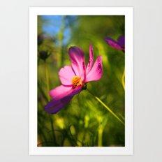 Cosmos Flower Photography Close up Sunlight Green summer Nature Organic Art Print