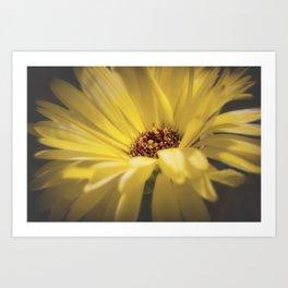 Yellow Calendula Art Print