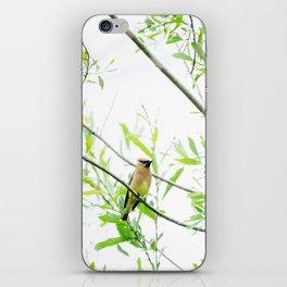 Cedar Waxwing iPhone Skin
