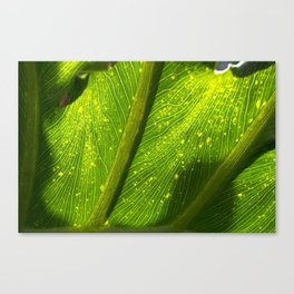 Spotted Leaf Canvas Print