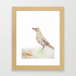Study of a Bird Framed Art Print